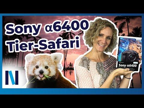 sony-α6400-–-das-steckt-im-neuen-tieraugen-autofokus!-(deutsch)