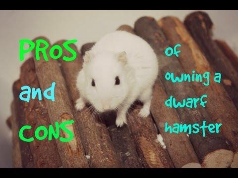 Dwarf Hamster Diet May 2017 Funnydog Tv