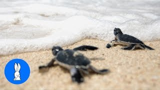 Turtles Swimming & Walking slowly... CUTEST compilation