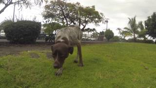 Hurley Loves The Hawaii Island Humane Society, But Wants A Furever Home!