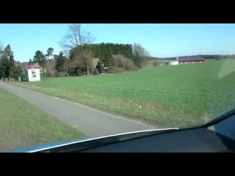 Wolf in Trelde (Buchholz in der Nordheide/ Landkreis Harburg, Niedersaschsen)