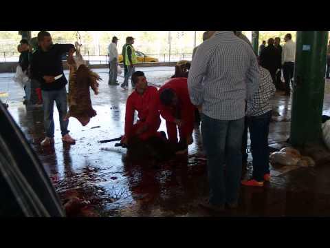 Kurban Bayramı sacrifice in Ankara