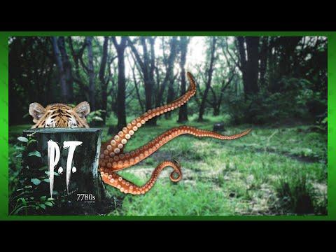 P.T. (PS4) - Octotiggy