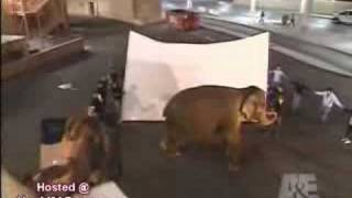 Criss Angel Elephant Disappear Revealed