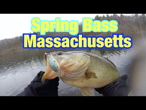 SPRING Bass Fishing Massachusetts!