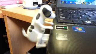 USB dog humping laptop.