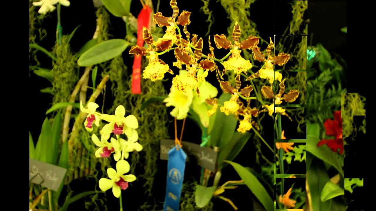 Festival de orquideas en el jard n bot nico universidad de for Jardines de orquideas