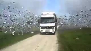 Птицы вылетели из фуры