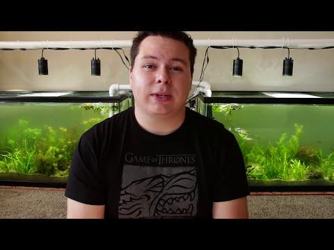 Plant Guide: Amazon Sword