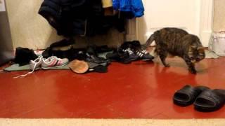 Что там делает кошка? Что то ищет.
