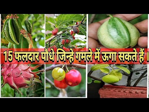 Top 15 Best Fruits To Grow In Pots | In India