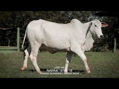 LOTE 164   CSCN 18136