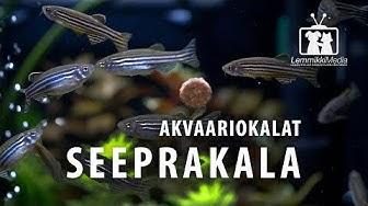 Akvaario: Seeprakala