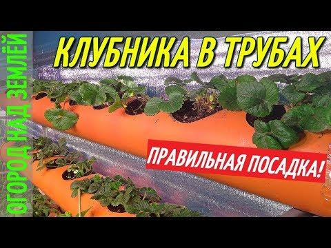 КЛУБНИКА В ТРУБАХ В ТЕПЛИЦЕ ЗИМОЙ,ПОСАДКА КЛУБНИКИ.