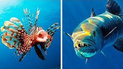 Wenn du das beim Schwimmen siehst, geh sofort aus dem Wasser!