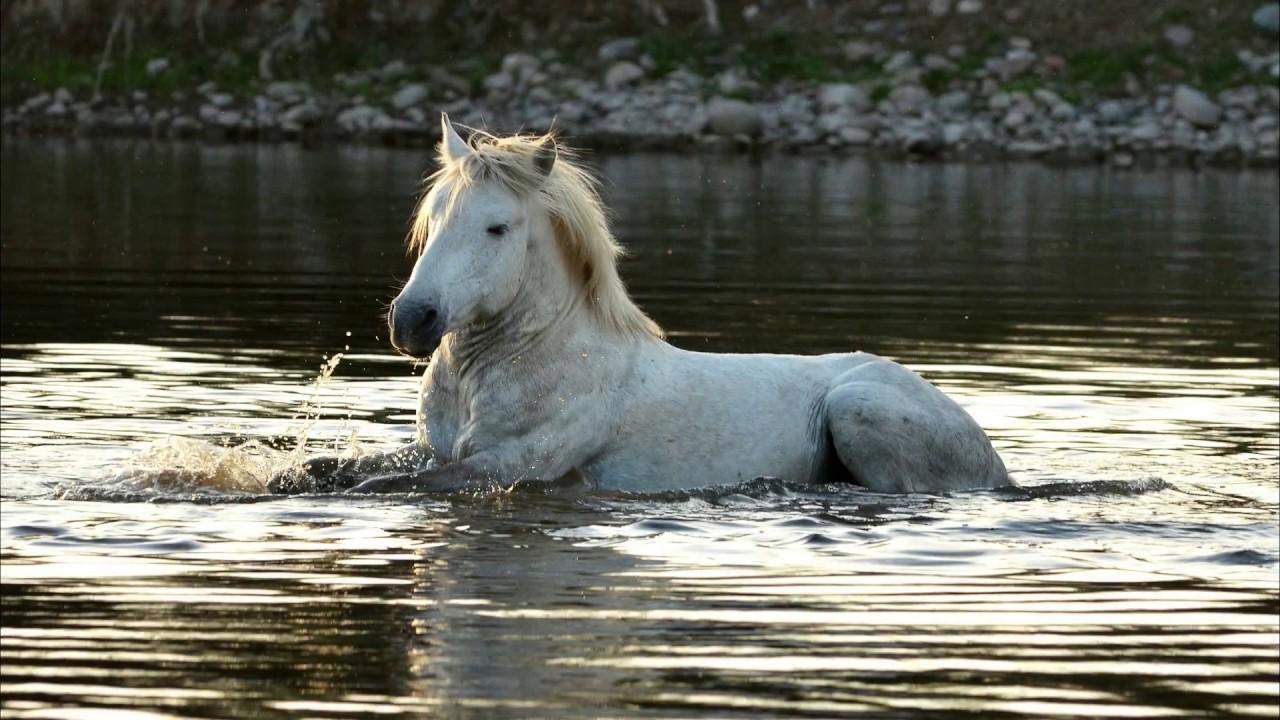 Where are wild horses found in america