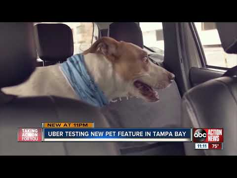 'Uber' To Test A New Feature That Lets You Bring Your Furry Friend