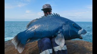 MONSTER FISH OFF THE ROCKS, NEW PB BLUE