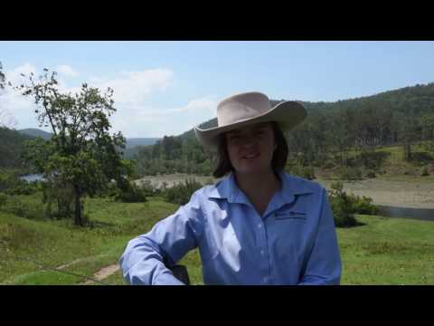 """""""Ross Creek"""", Buccarumbi - Rural Property For Sale - Farrell McCrohon Stock & Station Agents"""