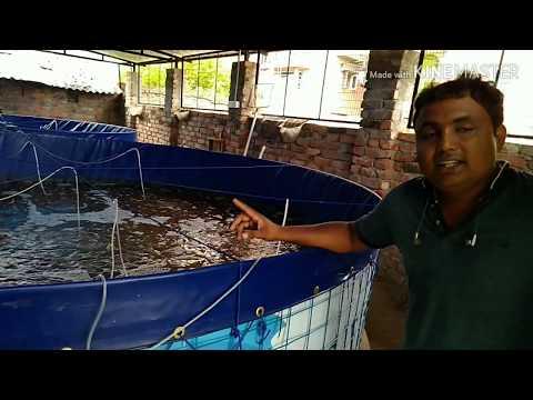 KOLKATA'S FIRST BIOFLOC FISH FARM.