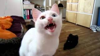 Кот - радист. Азбука Морзе ™