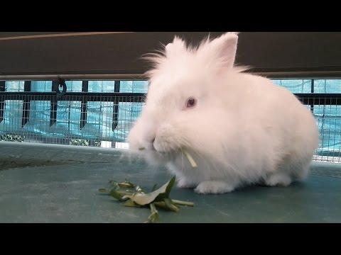 Vispo - Il coniglio parlante