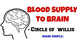 BLOOD SUPPLY TO BRAIN, CIRCLE OF WILLIS.
