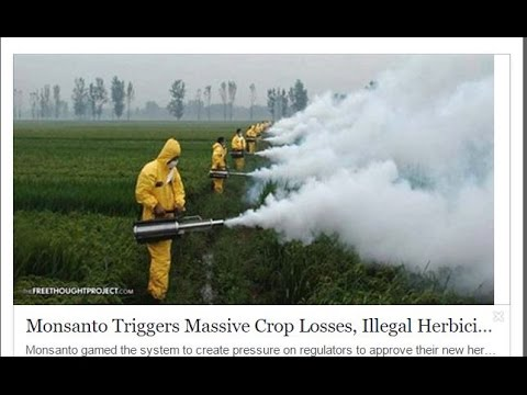 Monsanto Triggers Massive Crop Losses, Illegal Herbicide Spraying to Introduce New GMO Crop