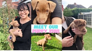 VLOG #1 Meeting And Bringing Home Our Gorgeous Little Patterdale Terrier Puppy.