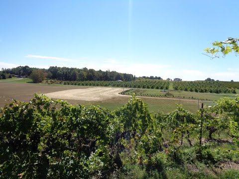 Grape Video 41   Vineyard Site Selection   Part 3   The Valley