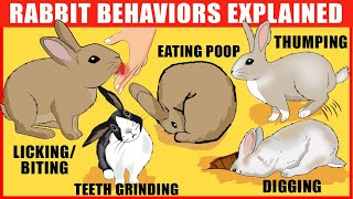 Rabbit Body Language: Meaning Behind 15 Strangest Rabbit Behaviors | Rabbits Jaw-Dropping Facts