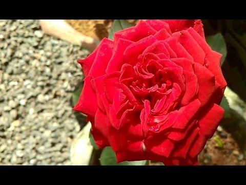 Beautiful Flowers for Garden - Best Combinations
