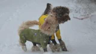 2013年1月ロビの雪遊び 追いかけっこと雪潜り?が大好き.