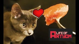 life-of-artyom-part-2