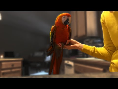 Is Morgan OKAY?! | Plus a Healthy Eating Tip For Parrots