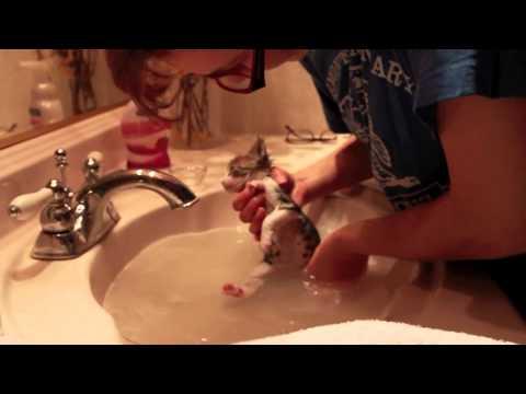 Mia's First Little Kitten Bath (Original Footage)