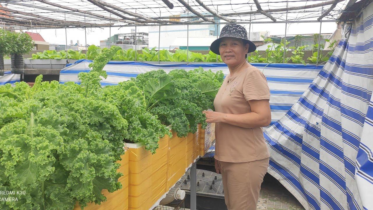 Chia sẻ cách trồng Cải Xoăn KALE , bón phân đúng cách cây mau phát triển | Khoa Hien 434