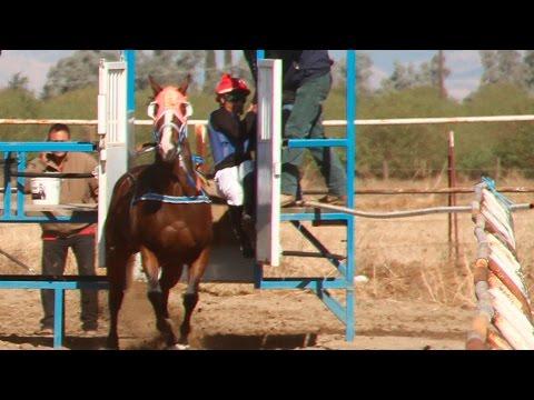 Carreras de caballos en hesperia california