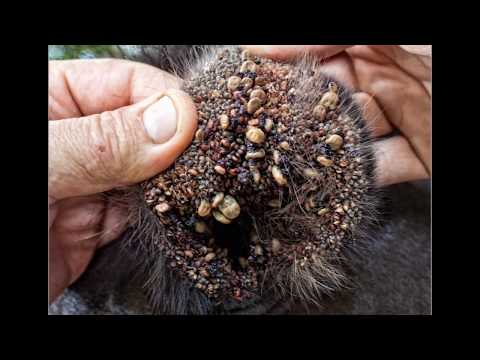 This Video made the internet cry: World's worst Tick Infestations