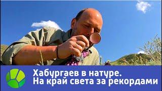 На край света за рекордами  Хабургаев в натуре | Живая Планета
