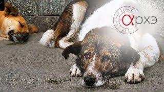 Андрей Тупикин: Бездомные собаки глазами биолога