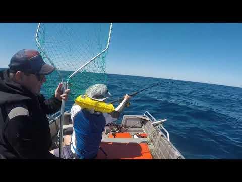 #Tuna#Tinnyfishing#SouthOz#PortLincoln