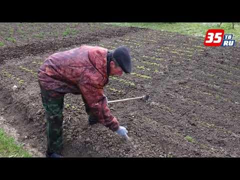 Вопрос: Что полезного посадить на даче, чтобы меньше вылезали сорняки?