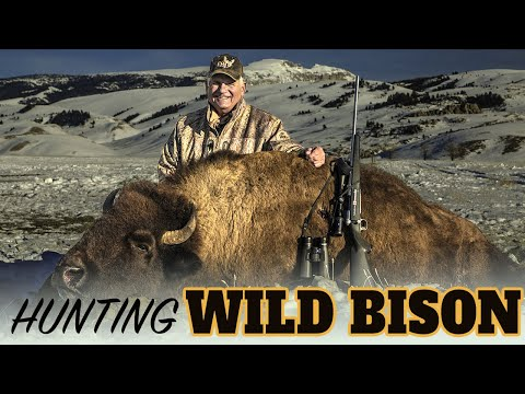 Wyoming Buffalo Hunting With Mike Eastman (Eastmans' Hunting TV)
