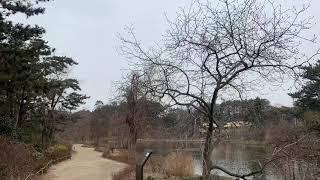 겨울 눈 내린 천리포 수목원