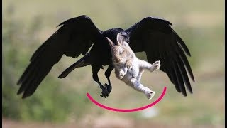 Мама-зайчиха отбила зайчонка из лап ворона хищника – удивительная история с летающим ёжиком
