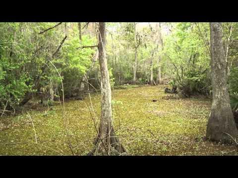 FGF Adventures - Jean Lafitte National Historical Park and Preserve - Barataria Preserve