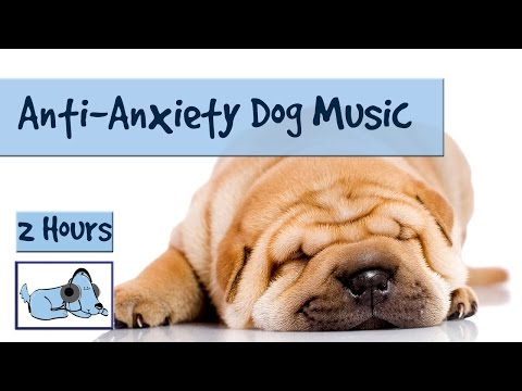 Music for Dogs and Puppies. Help your Anxious Dog to Sleep and Calm Down. Cure Dog Anxiety!