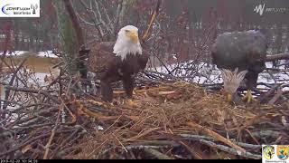 The Trio Eagles - Dark, Dreary, Damp Day - 02-20-18