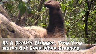 As A Beauty Blogger,  Ying Ying Works Out Even When Sleeping | iPanda